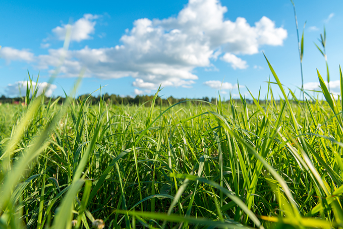 Auge de la agricultura ecológica en Andalucía