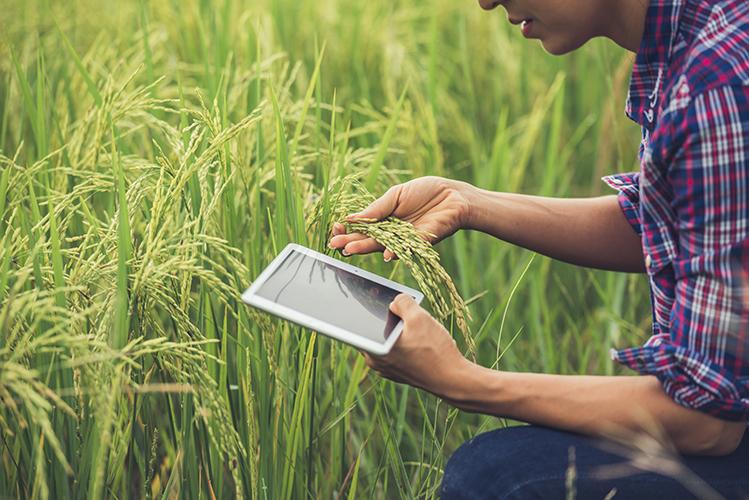 La importancia de un seguro agrario en España